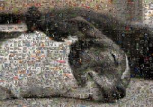 Mosaikbild Ergebnis